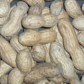 Graines Arachide (Cacahuète)