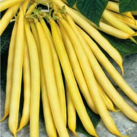 Graines Haricot jaune nain 'Maxidor'
