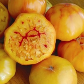 Graines Tomate ancienne 'Gold Medal'