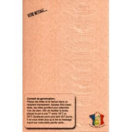 Carte de Voeux 2016 sur feuille de bois et son Haricot magique BONHEUR - Carte à graines