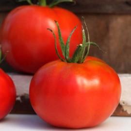 Tomate Marglobe