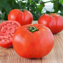 Tomate Glamour (tomate ancienne)