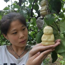 Poire bouddha - Moule en plastique (Moulage de fruits et légumes)