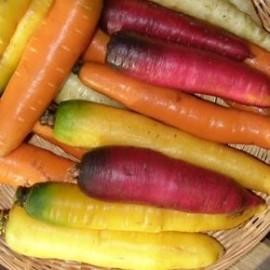 Carotte de couleur en mélange