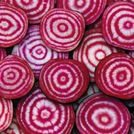 Graines Betterave 'Chioggia'