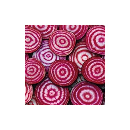Betterave 'Chioggia'