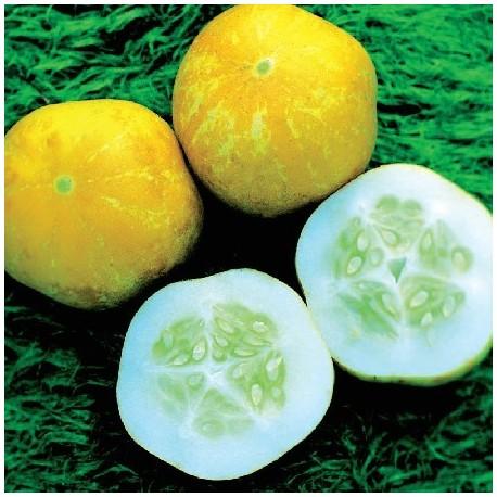 Graines Concombre citron