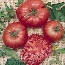 Graines Tomate ancienne 'Brandywine Red'