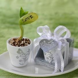 Haricot Magique LOVE et son petit pot décoré