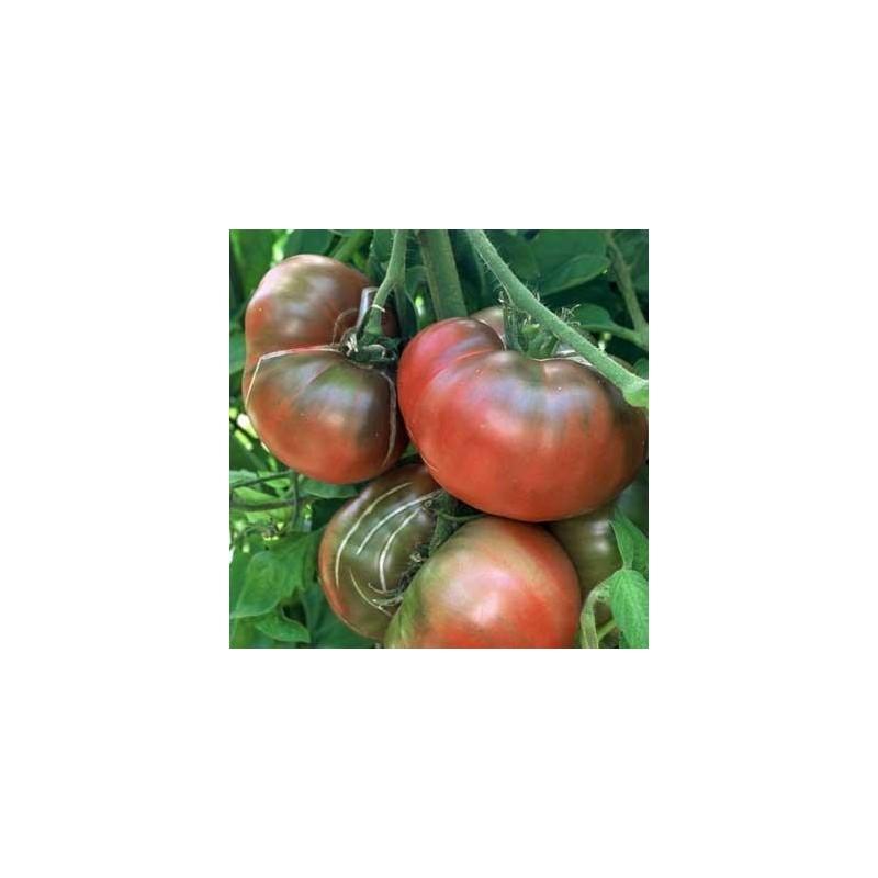 Graines tomate noire 39 noire de crim e 39 - Tomate de crimee ...