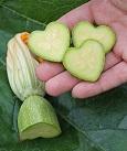 Moulage de fruit - moule pour concombre et courgette