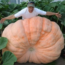 Courge Atlantic Giant (Potiron géant)