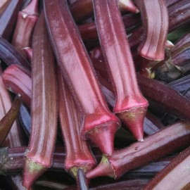 Graines Okra Red Burgundy (Gombo rouge)