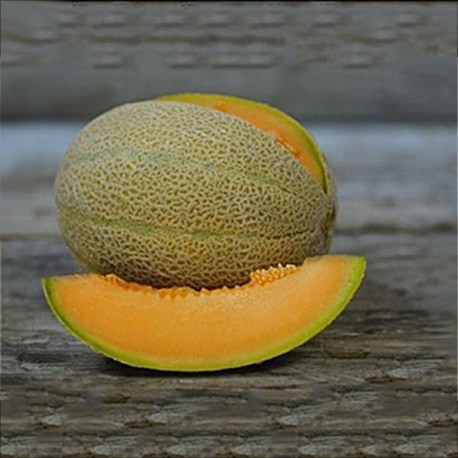 Graines Melon Hale's Best jumbo