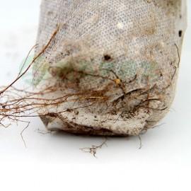 100 Godets tissu biodégradable - Taille 8cm X 8cm