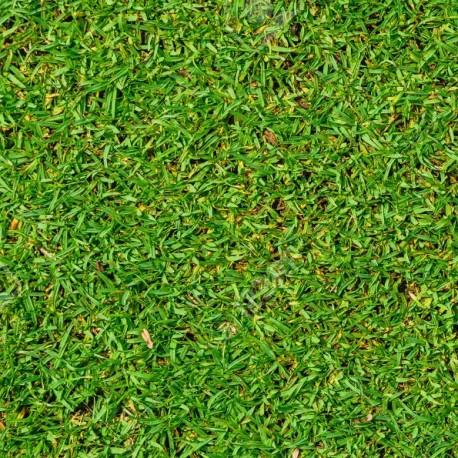 Graines KIKUYU Pennisetum Clandestinum (substitut de gazon)
