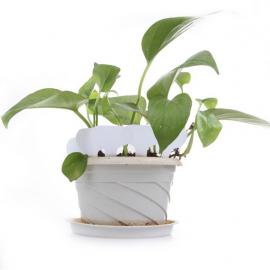 12 Etiquettes plastique BLANCHE pour semis, bouture, potée - 4,5x2,5cm