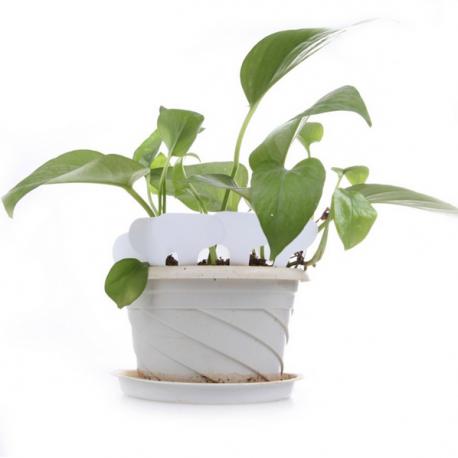 Etiquette plastique pour semis, bouture, potée - 4,5x2,5cm