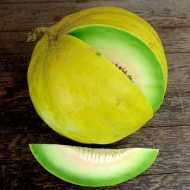 Melon Boule d'Or