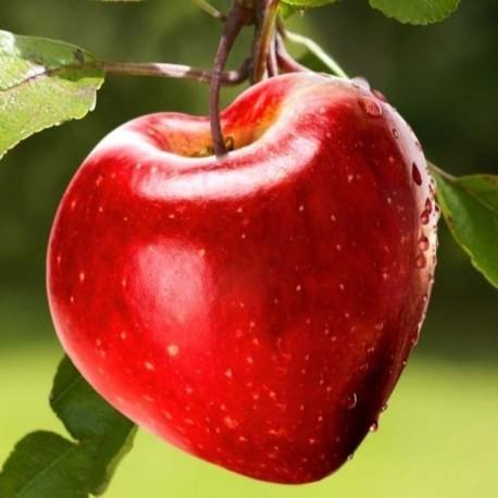 Pomme coeur - Moule en plastique (Moulage de fruits et légumes)