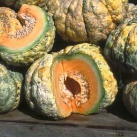 Melon Prescott Fond Blanc