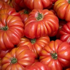 Tomate Costoluto Genovese - Tomate costoluto Fiorentino - Tomate Costoluto di Parma