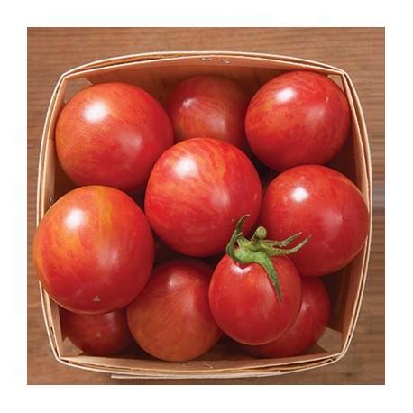 Tomate ARTISAN™ Pink Bumble Bee