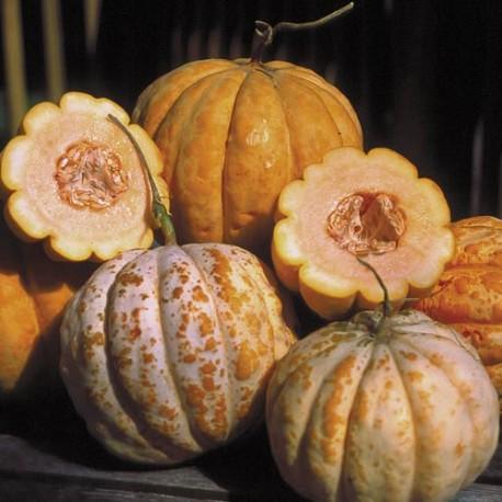 Melon Délice de la table
