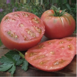 Tomate Ponderosa (tomate ancienne)