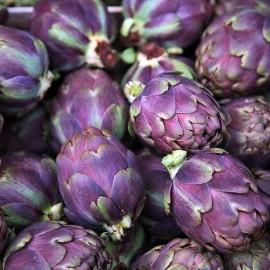 Artichaut Volet de Provence