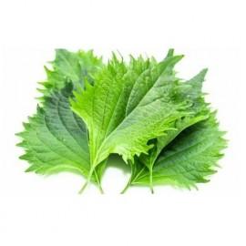 Shiso vert (ou Périlla verte)
