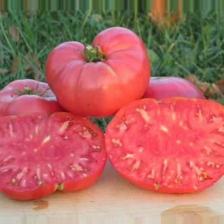 Tomate Watermelon Beefsteak (tomate ancienne)