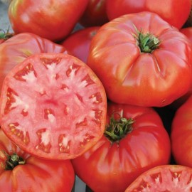 Tomate Mortgage Lifter (tomate ancienne)