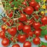 Tomate Sweetie (tomate cerise)