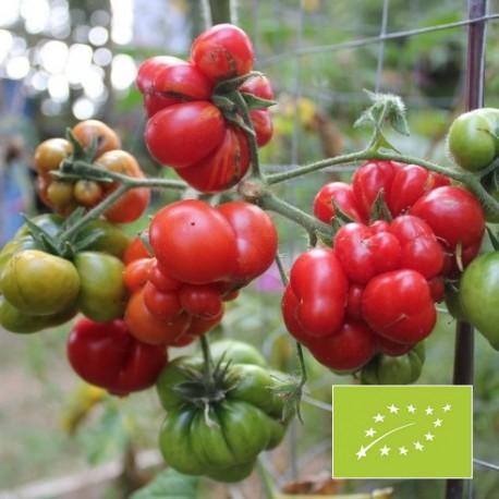 Graines Tomate 'Voyageur'