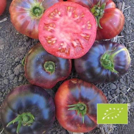Tomate Indigo Blue Beauty BIO (Tomate bleue)