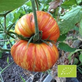 Tomate Copia BIO