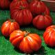 Kit futé - Des Tomates pour Ma Région n°2 - SPECIAL Sud de la France - Tomate Beefsteak