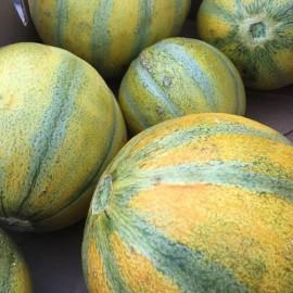 Melon Ogen (Melon Haogen)