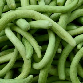 Melon Concombre Arménien (Concombre serpent)