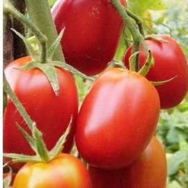 Tomate De Berao