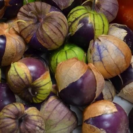 Tomatillo Violet (Physalis ixocarpa)
