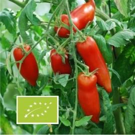 Tomate Andine Cornue BIO (tomate ancienne)