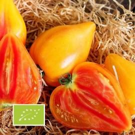 Tomate Coeur de boeuf bicolore Oxheart Striped BIO (tomate ancienne)