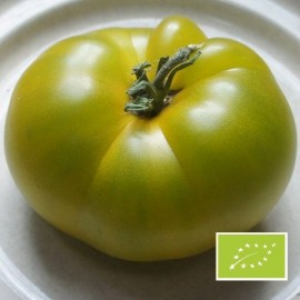 Tomate Dorothy Green BIO (tomate ancienne)
