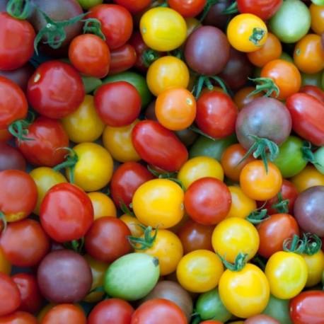 Tomate cerise en mélange (tomate cerise)