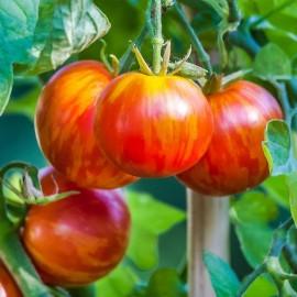 Tomate Tigrella