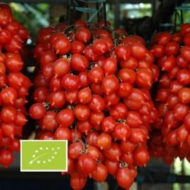 Tomate Principe Borghese BIO (tomate cerise)