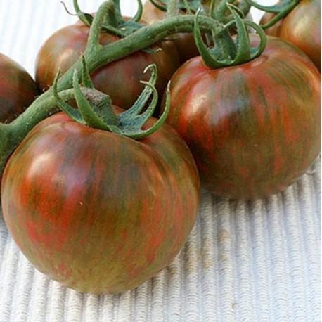Graines Tomate ancienne 'Black Zebra'