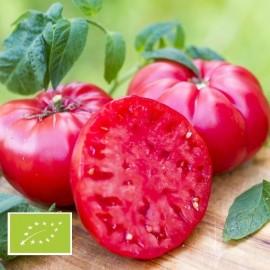Tomate Mikado Violetor BIO (tomate ancienne)